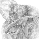 kämpfende Elefanten